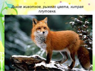 Дикое животное, рыжего цвета, хитрая плутовка.