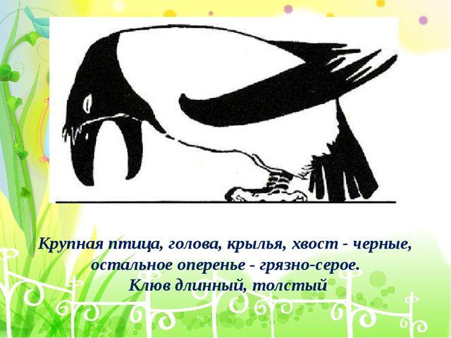 Крупная птица, голова, крылья, хвост - черные, остальное оперенье - грязно-се...