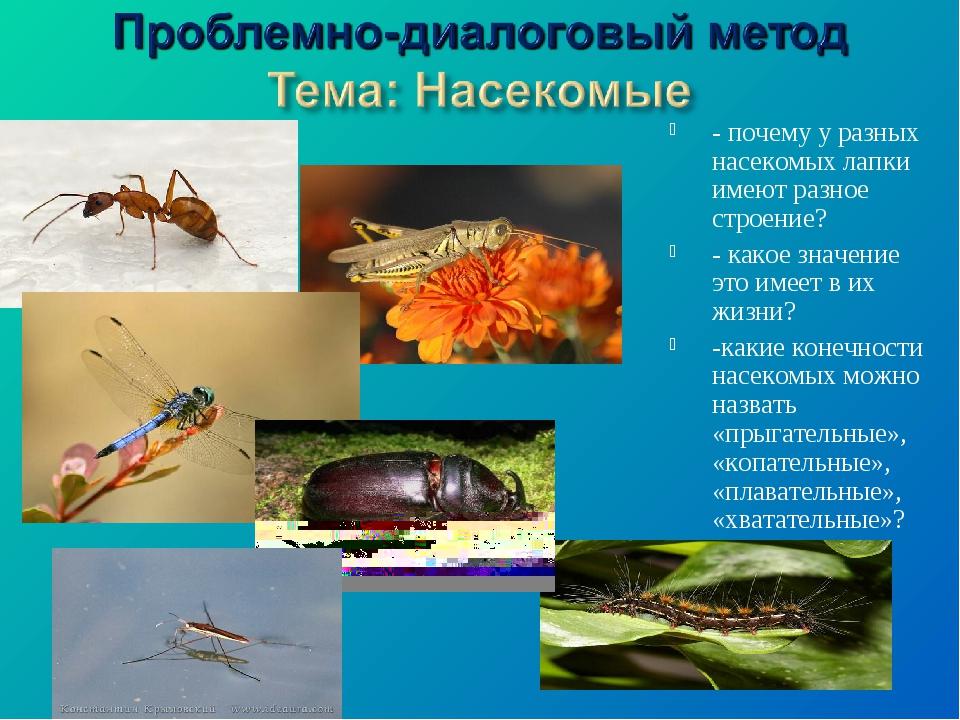 - почему у разных насекомых лапки имеют разное строение? - какое значение это...