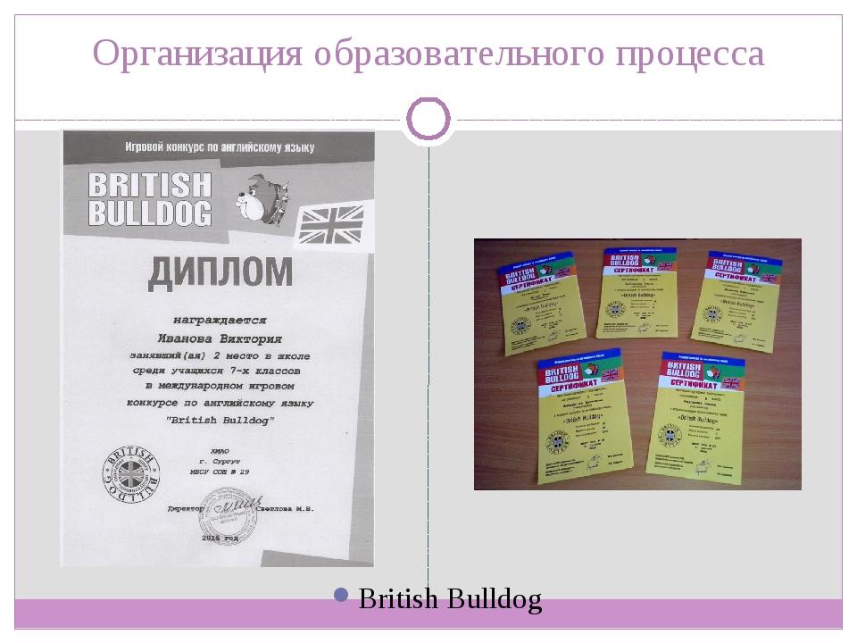 Организация образовательного процесса British Bulldog