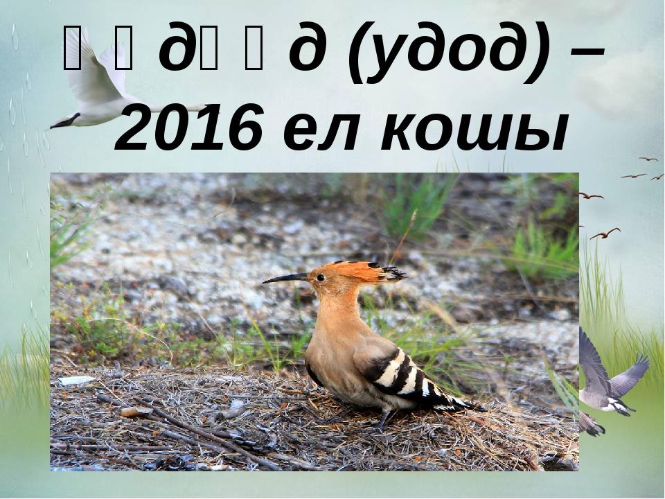 Һөдһөд (удод) – 2016 ел кошы