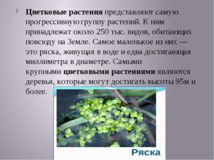 Цветковые растенияпредставляют самую прогрессивную группу растений. К ним пр