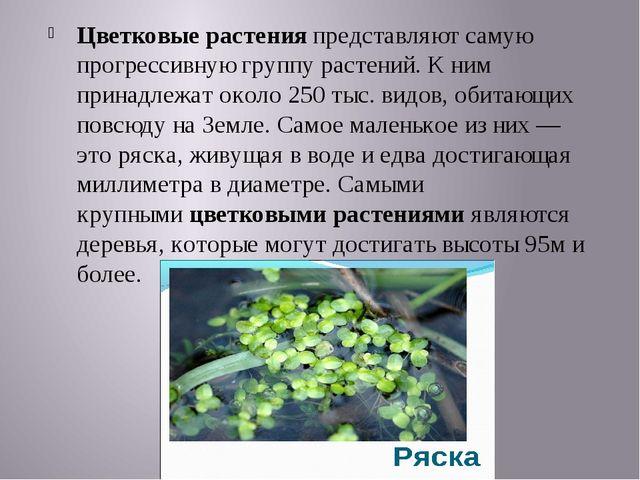 Цветковые растенияпредставляют самую прогрессивную группу растений. К ним пр...