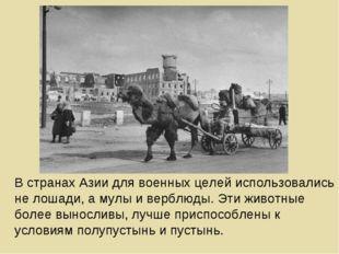 В странах Азии для военных целей использовались не лошади, а мулы и верблюды.