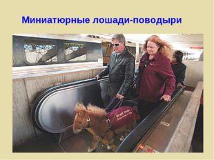 Миниатюрные лошади-поводыри