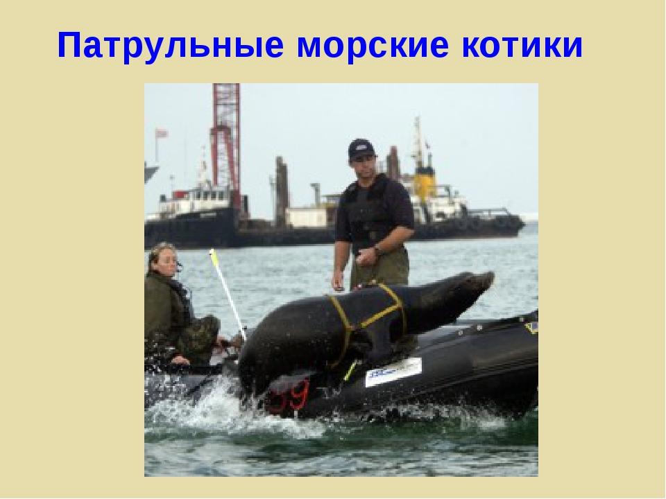 Патрульные морские котики