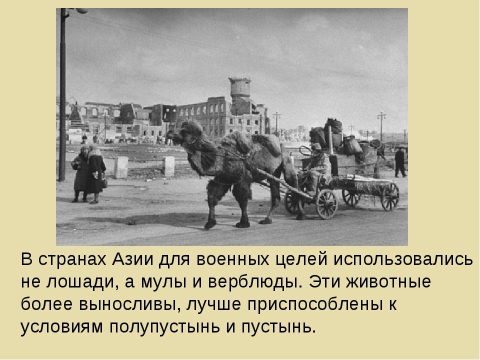 В странах Азии для военных целей использовались не лошади, а мулы и верблюды....