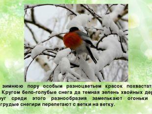 Лес в зимнюю пору особым разноцветьем красок похвастаться не может. Кругом бе