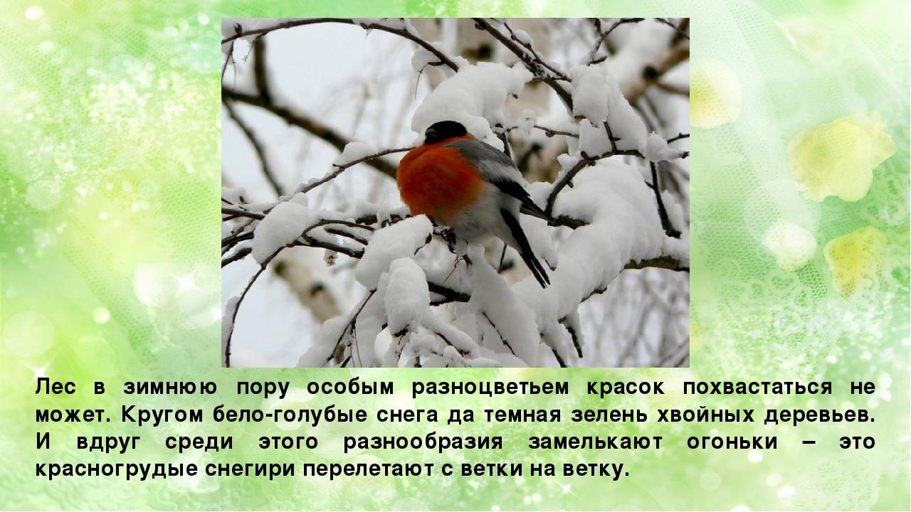 Лес в зимнюю пору особым разноцветьем красок похвастаться не может. Кругом бе...
