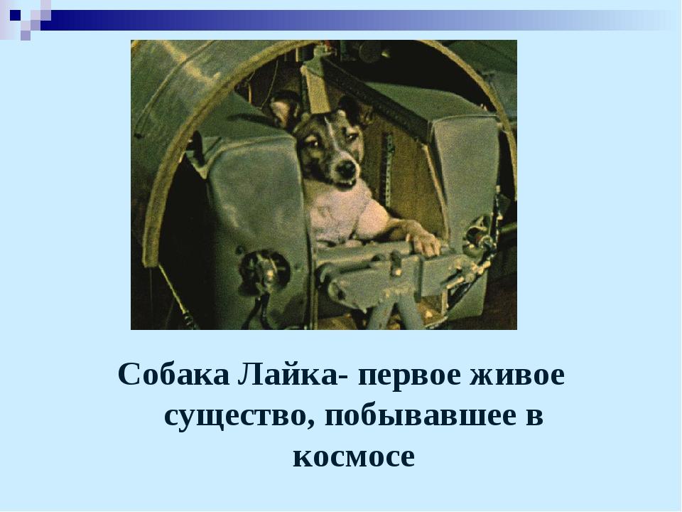 Собака Лайка- первое живое существо, побывавшее в космосе
