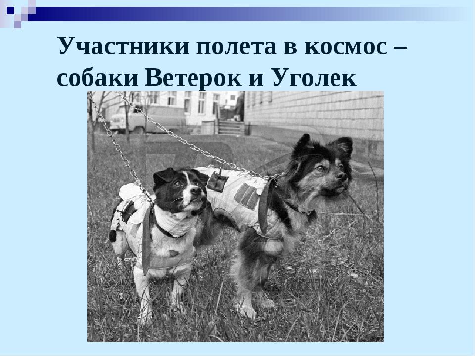Участники полета в космос – собаки Ветерок и Уголек