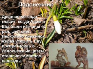 Древняя легенда гласит: когда Адам и Ева были изгнаны из рая, шёл снег. Неск