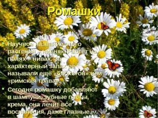 Ромашки Научное название этого растения – нивняк. Растёт на полях – нивах. З