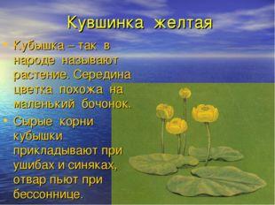 Кувшинка желтая Кубышка – так в народе называют растение. Середина цветка пох