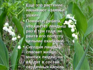 Ещё это растение называют «заячьи ушки». Помните, ребята, что цветет ландыш р
