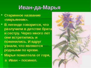 Иван-да-Марья Старинное название «марьянник». В легенде говорится, что разлу