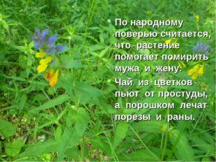 По народному поверью считается, что растение помогает помирить мужа и жену. Ч