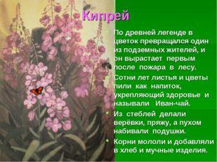 Кипрей По древней легенде в цветок превращался один из подземных жителей, и о