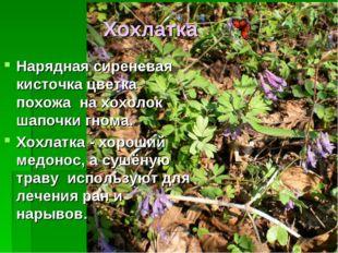 Хохлатка Нарядная сиреневая кисточка цветка похожа на хохолок шапочки гнома.