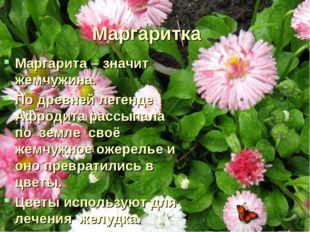 Маргаритка Маргарита – значит жемчужина. По древней легенде Афродита рассыпал