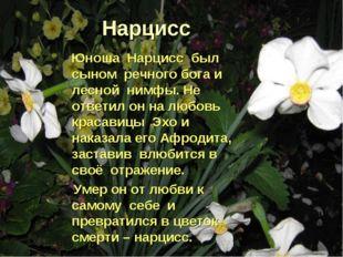 Нарцисс Юноша Нарцисс был сыном речного бога и лесной нимфы. Не ответил он на
