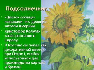 Подсолнечник «Цветок солнца» называли его древние жители Америки. Христофор К