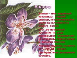 Азалия Азалея – имя индийской красавицы, ставшей цветком, не пожелав выйти за