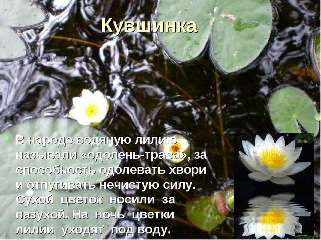 Кувшинка В народе водяную лилию называли «одолень-трава», за способность одол...