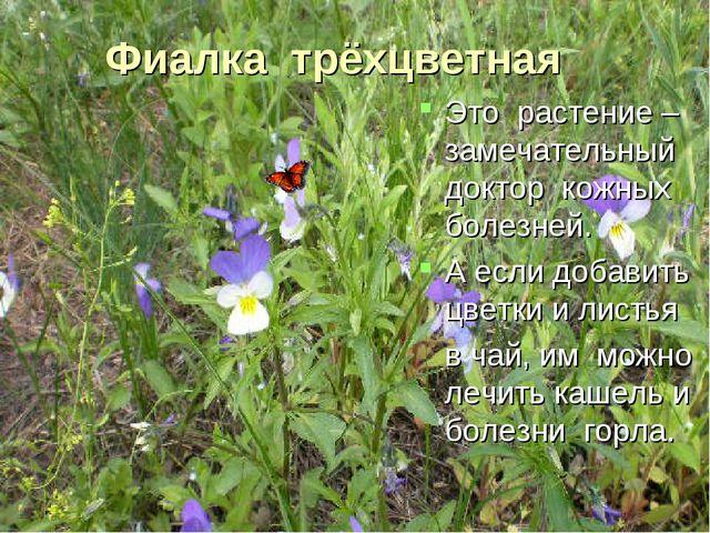Фиалка трёхцветная Это растение – замечательный доктор кожных болезней. А есл...