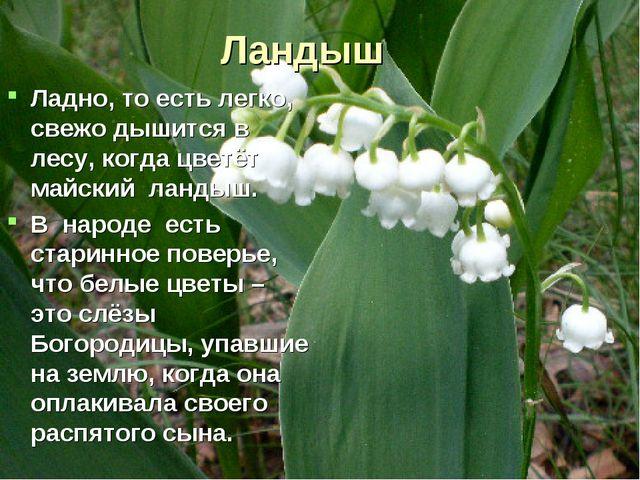 Ландыш Ладно, то есть легко, свежо дышится в лесу, когда цветёт майский ланды...