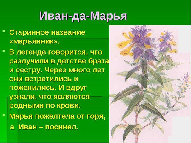 Иван-да-Марья Старинное название «марьянник». В легенде говорится, что разлу...