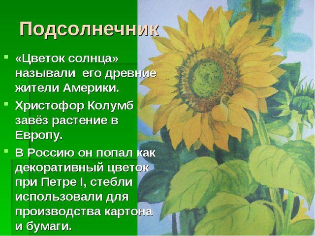 Подсолнечник «Цветок солнца» называли его древние жители Америки. Христофор К...
