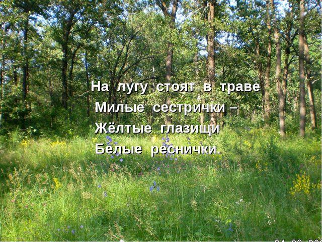 На лугу стоят в траве Милые сестрички – Жёлтые глазищи Белые реснички.