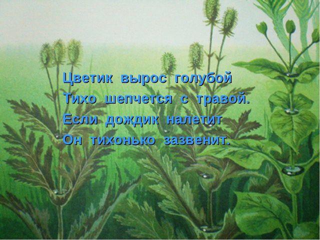 Цветик вырос голубой Тихо шепчется с травой. Если дождик налетит Он тихонько...