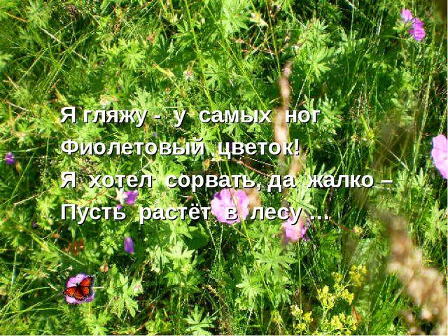 Я гляжу - у самых ног Фиолетовый цветок! Я хотел сорвать, да жалко – Пусть ра...