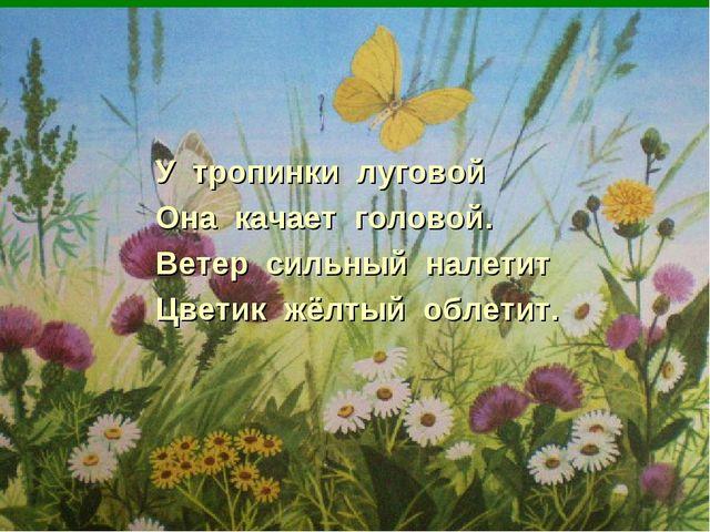 У тропинки луговой Она качает головой. Ветер сильный налетит Цветик жёлтый об...
