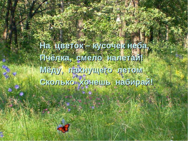 На цветок – кусочек неба, Пчёлка, смело налетай! Мёду, пахнущего летом Скольк...