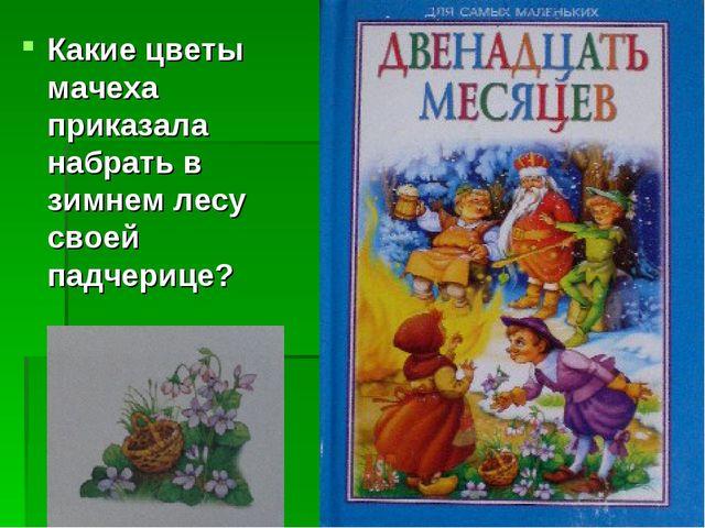 Какие цветы мачеха приказала набрать в зимнем лесу своей падчерице?