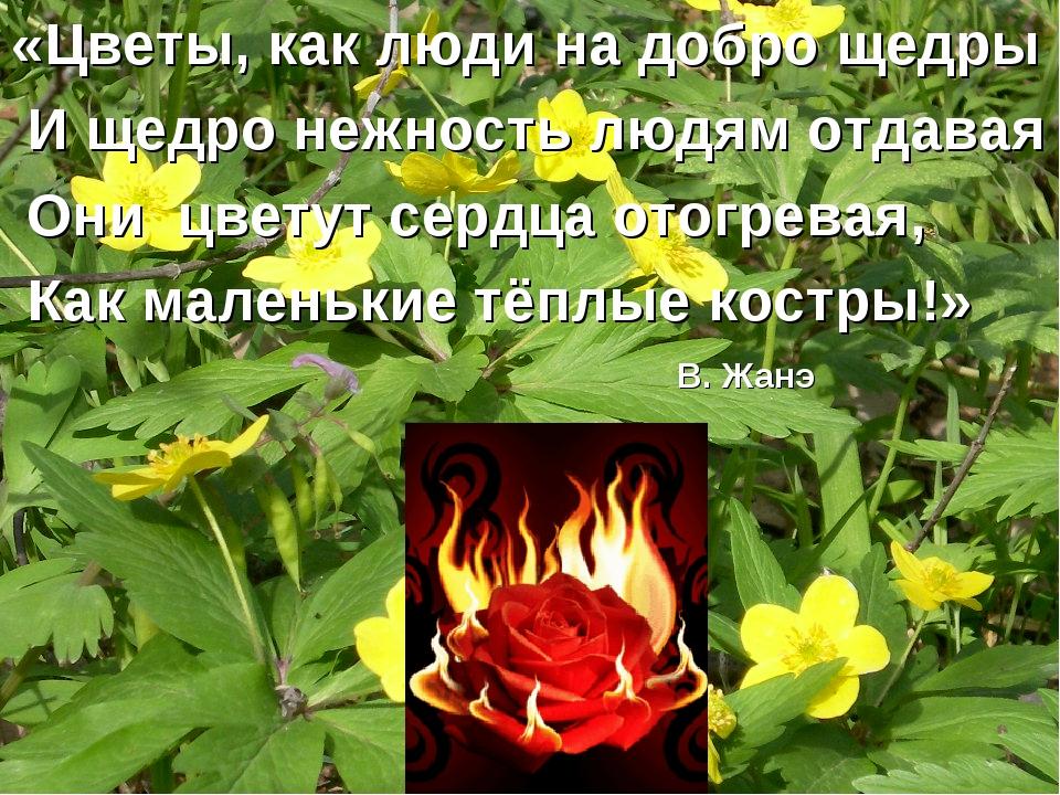 «Цветы, как люди на добро щедры И щедро нежность людям отдавая Они цветут сер...