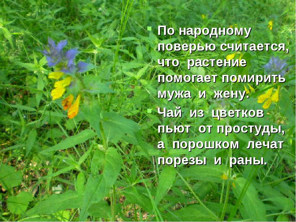 По народному поверью считается, что растение помогает помирить мужа и жену. Ч...