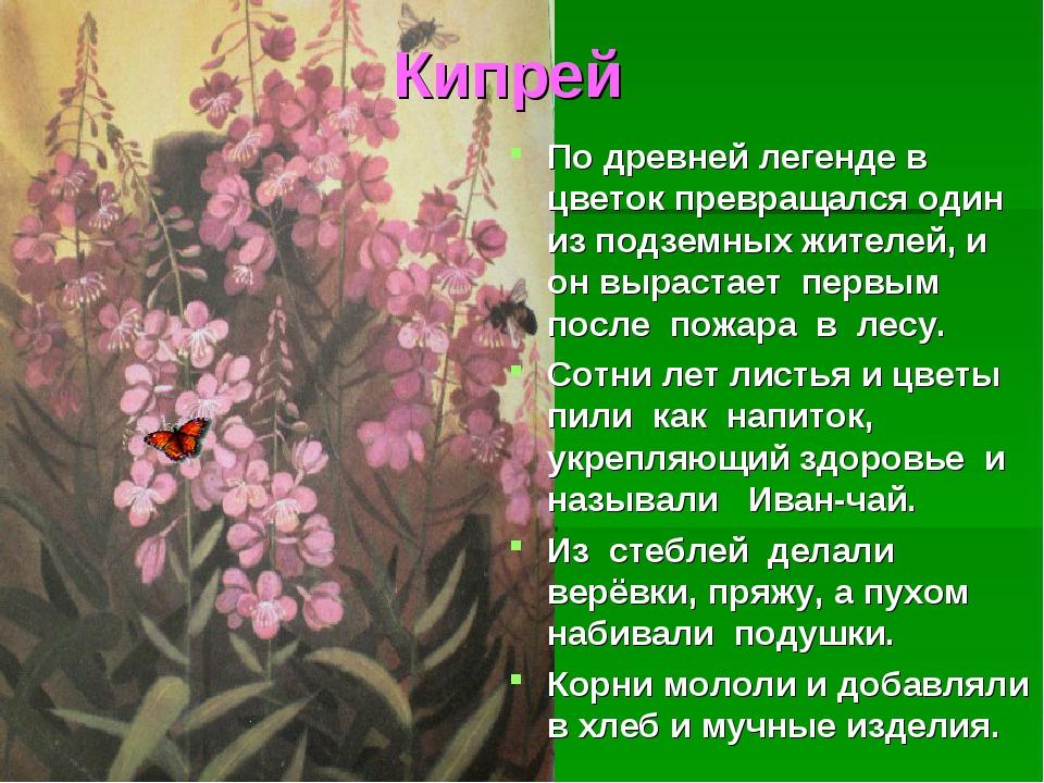 Кипрей По древней легенде в цветок превращался один из подземных жителей, и о...