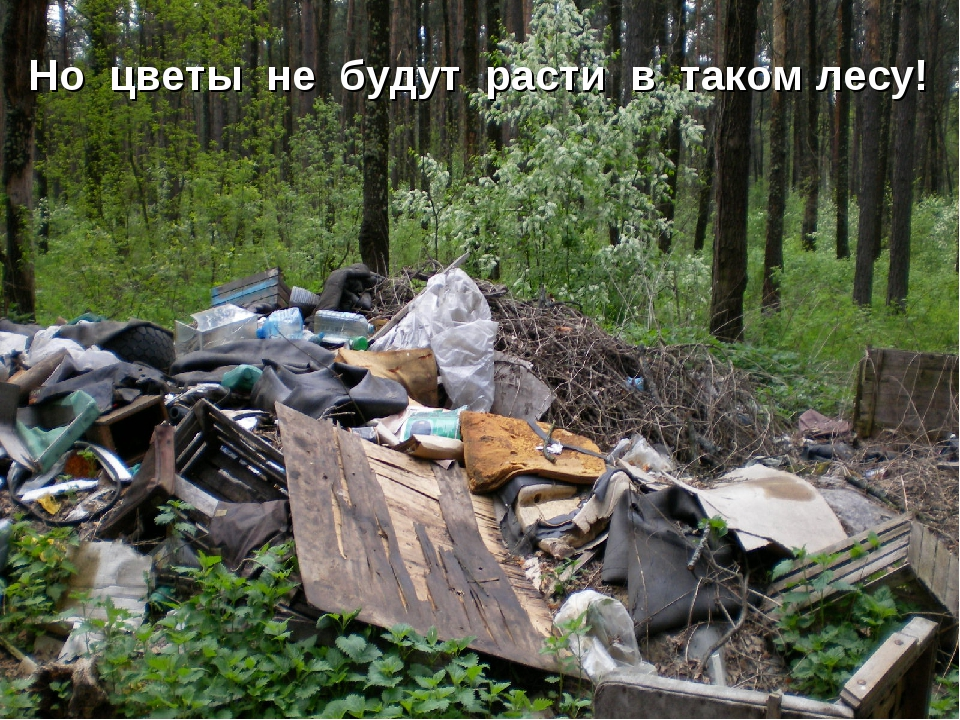 Но цветы не будут расти в таком лесу!