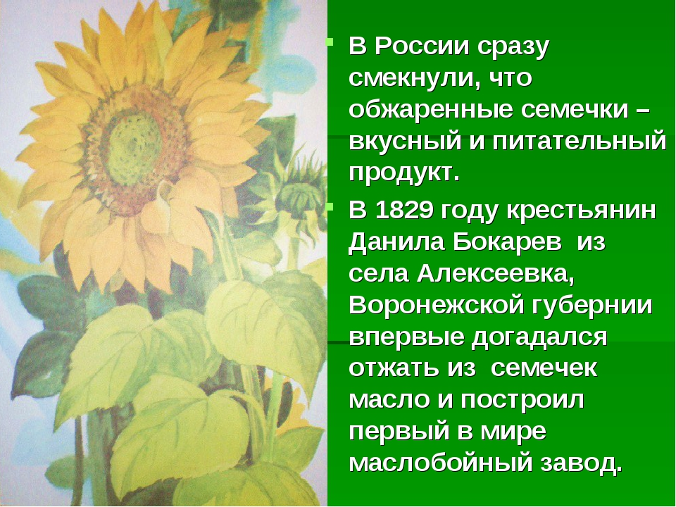 В России сразу смекнули, что обжаренные семечки – вкусный и питательный проду...