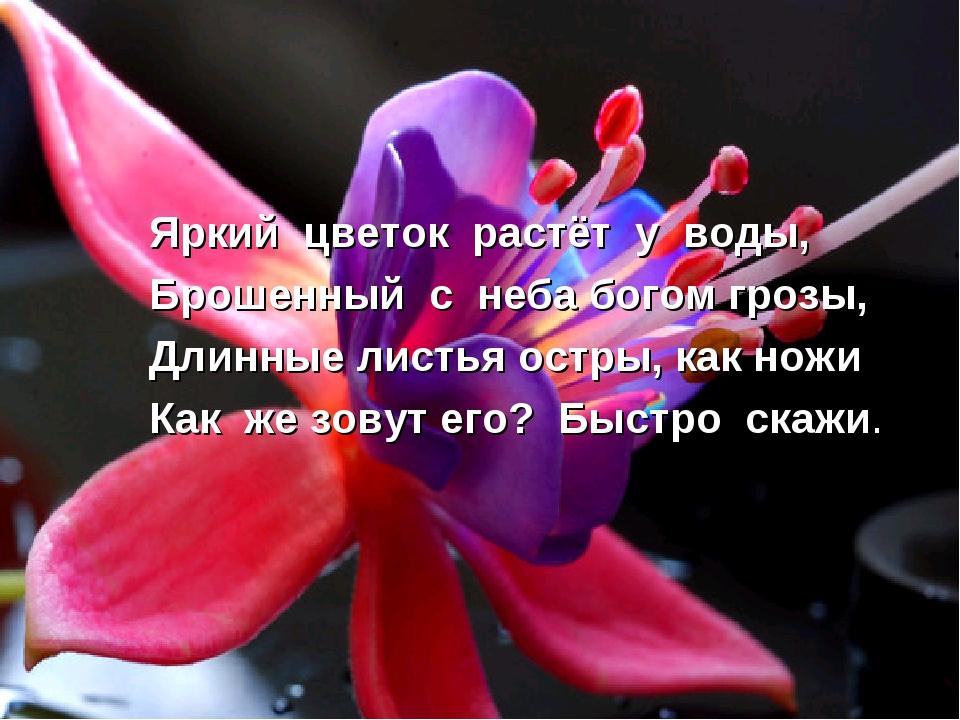 Яркий цветок растёт у воды, Брошенный с неба богом грозы, Длинные листья остр...