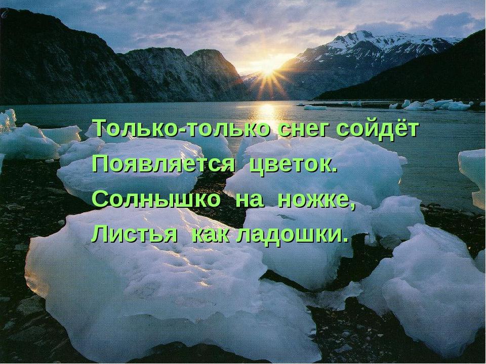 Только-только снег сойдёт Появляется цветок. Солнышко на ножке, Листья как ла...