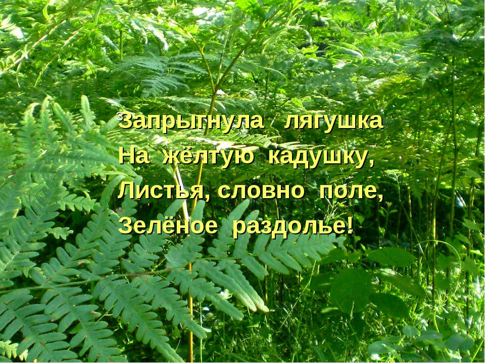 Запрыгнула лягушка На жёлтую кадушку, Листья, словно поле, Зелёное раздолье! З