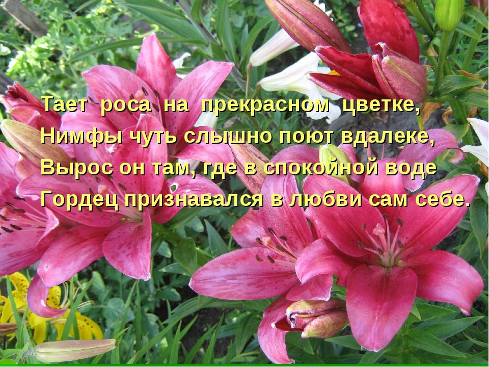Тает роса на прекрасном цветке, Нимфы чуть слышно поют вдалеке, Вырос он там...