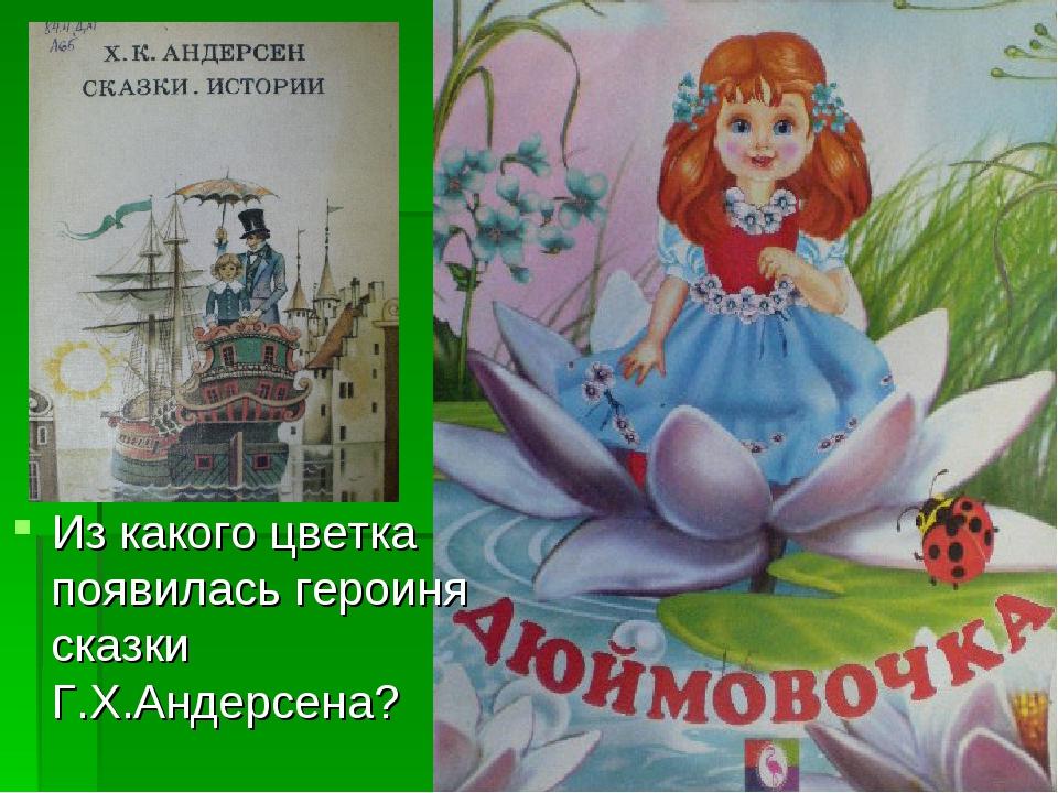 Из какого цветка появилась героиня сказки Г.Х.Андерсена?