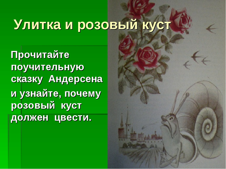 Улитка и розовый куст Прочитайте поучительную сказку Андерсена и узнайте, поч...