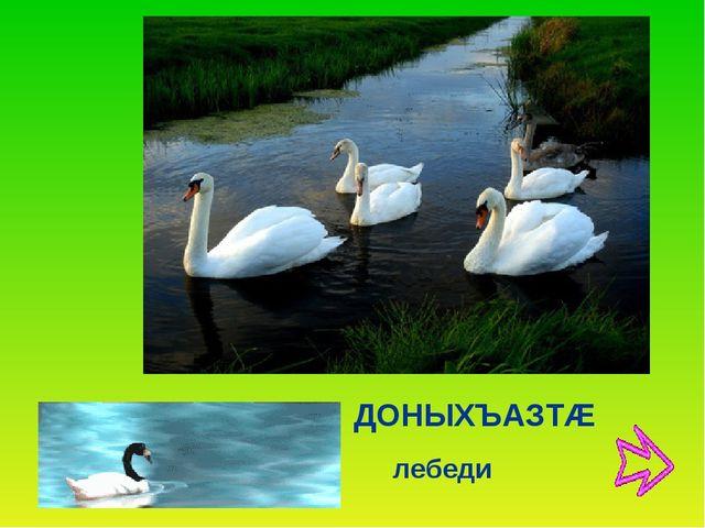 лебеди ДОНЫХЪАЗТÆ